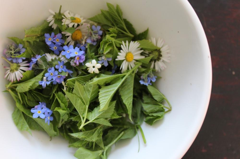 2016-05-26_Salat-Wildkräuter.JPG