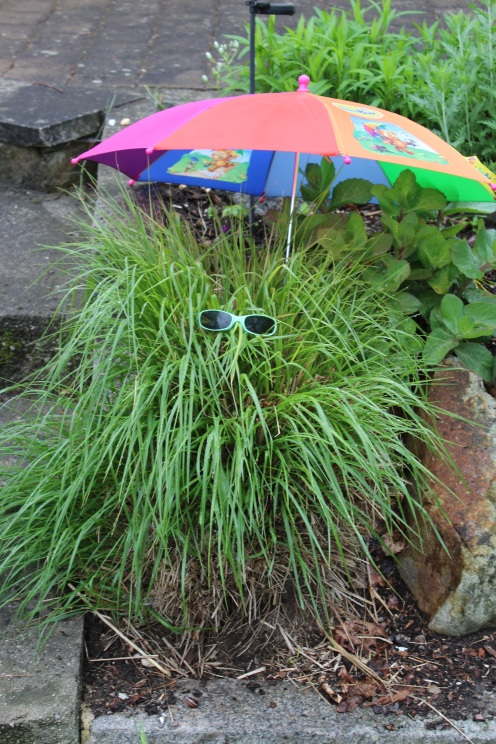 2016-05_24_Gras am Eingang_Sonnenbrille