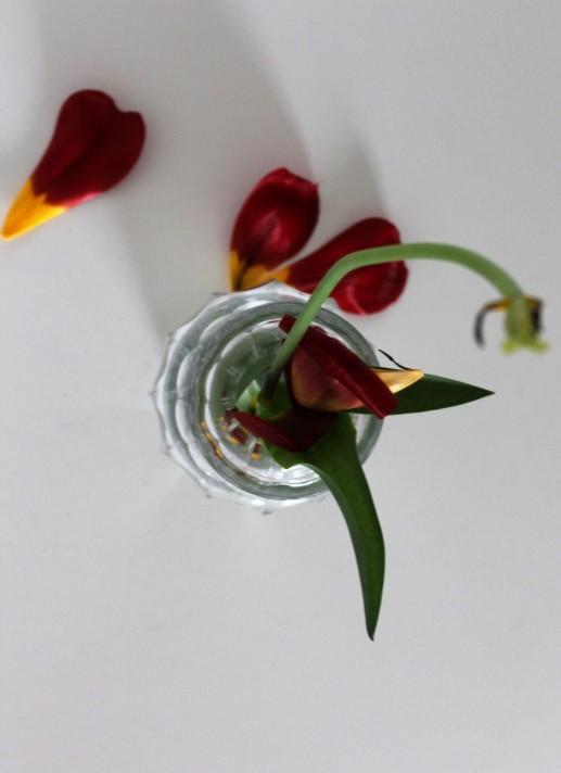 TulpeinderVase