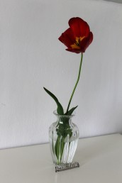 TulpeinderVase7